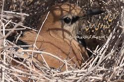 پخش مستند طبیعت ایران از شبکه چهار