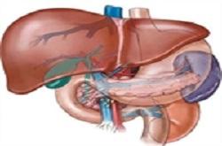 ارائه راهکارهایی برای پیشگیری از ابتلا به بیماریهای کبدی در «یک فنجان سلامت»